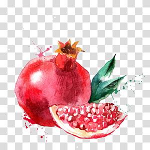 Pintura de frutas de romã vermelha, Pintura em aquarela Fruit Drawing Illustration, Romã pintada à mão png