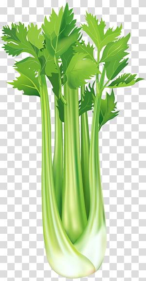 ilustração de vegetais verdes, vegetais de aipo-rábano, aipo grátis PNG clipart