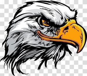 ilustração de águia branca e marrom, logotipo da águia careca, águia dos desenhos animados png