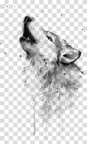 Aquarela, lobo cinzento, arte desenho, raposa aquarela png