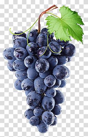 Uva comum vinho Isabella Concord uva, uva roxa, uvas no galho de árvore PNG clipart