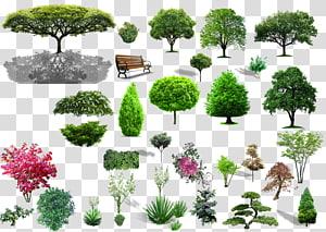 colagem de árvore verde, paisagem de arbusto de árvore, material vegetal PNG clipart