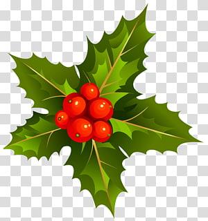 Visco, visco de Natal, ilustração de frutas vermelhas png