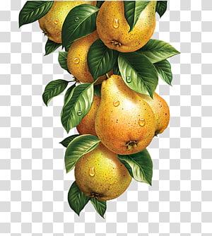 cacho de frutas amarelas, limonada frutas legumes aquarela pintura ilustração, peras amarelas png