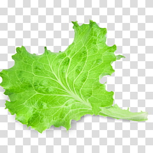 ilustração de vegetais de folhas verdes, alface de folha vermelha Salada de vegetais de folhas, folhas png