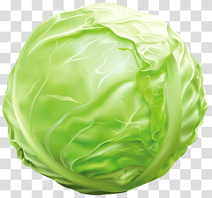 ilustração de repolho verde, repolho vegetal, repolho png