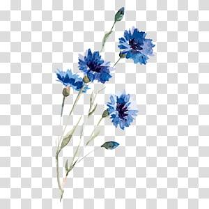 desenho de centáurea ilustração de pintura em aquarela, flores em aquarela, ilustração de flor azul em petaled PNG clipart