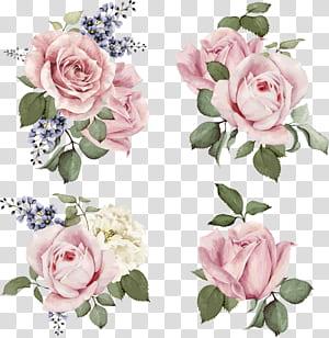 Rose illustration Ilustração da flor, rosas pintadas à mão, quatro cachos de rosas cor de rosa png