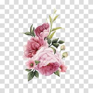 Rosas Centifolia Flores cor de rosa Convite de casamento Flores cor de rosa, HD aquarela pintada à mão rosas, ilustração de flor rosa PNG clipart