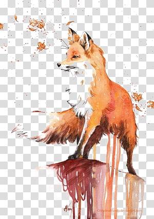 raposa laranja, pintura em aquarela raposa vermelha desenho, raposa png