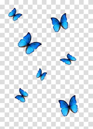 Borboleta azul Phengaris alcon, borboleta azul, sete borboletas azuis png