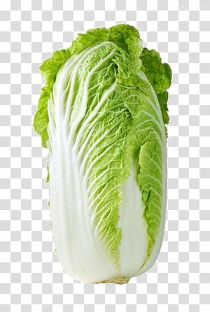 vegetais verdes, repolho roxo Couve-flor Couve-repolho Napa, HD clipes de repolho png