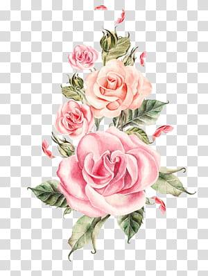 Casamento Rose Flower, buquê de rosas pintadas à mão, ilustração de rosas cor de rosa PNG clipart