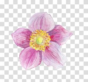 flor de pétalas roxa e amarela, Tinta para aguarela, Tinta para aguarelas png