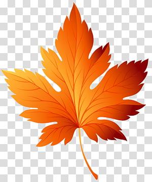 folha marrom, cor da folha de outono, folha de outono PNG clipart