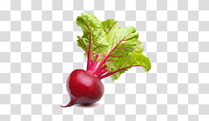vegetal vermelho, Mangelwurzel acelga beterraba sacarina beterraba vegetal, beterraba PNG clipart