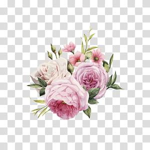 Flores cor de rosa cor de rosa, HD aquarela pintada à mão rosas, rosas cor de rosa e brancas PNG clipart