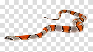 Slither.io Kingsnakes, Cobra PNG clipart