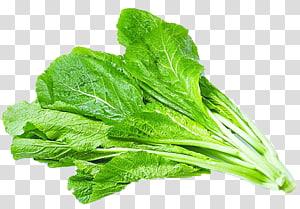 ilustração de repolho, salada de vegetais de alface Bhurta de Hong Kong, espinafre de legumes Brassica png