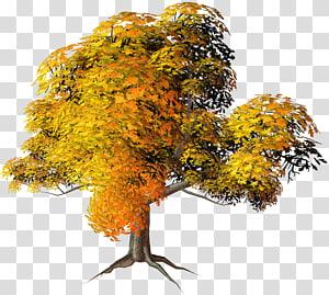 Árvore de outono, grande árvore de outono amarelo, amarelo e laranja árvore folheada PNG clipart