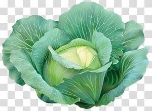 repolho verde, repolho vegetal, repolho PNG clipart