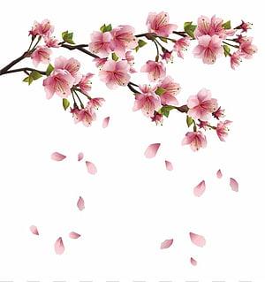 pétala rosa caindo, flor de cerejeira, pétalas de flor Sakura png