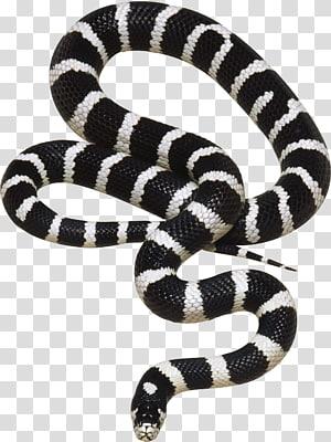 serpente zebra, Spineless se pergunta cada coisa rastejante: contos verdadeiros de vida selvagem ligeiramente repulsiva Livro Amazon.com Inseto, cobra PNG clipart