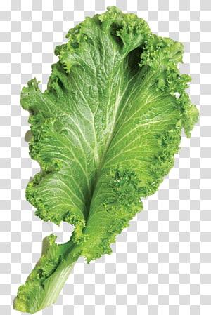 alface verde, folha Brassica juncea vegetal, mostarda png