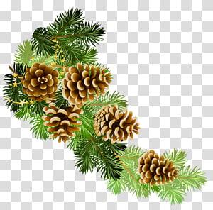 ilustração de pinhas, cone de conífera ramo de pinheiro silvestre, ramo de pinheiro com cones PNG clipart