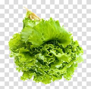 alface verde, alface vegetal, salada de folhas png