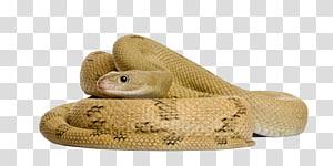 cobra marrom, cobra de milho cobra de rato, cobra entrincheirada PNG clipart