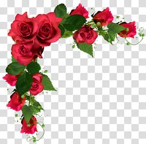 Buquê de flores rosas, flores do casamento, ilustração de moldura de rosas vermelhas PNG clipart