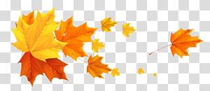 ilustração de folha de bordo, outono, folhas de outono Deco PNG clipart