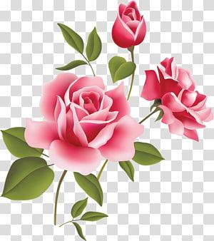 Rose Pink, Pink Rose Art e flores cor de rosa PNG clipart