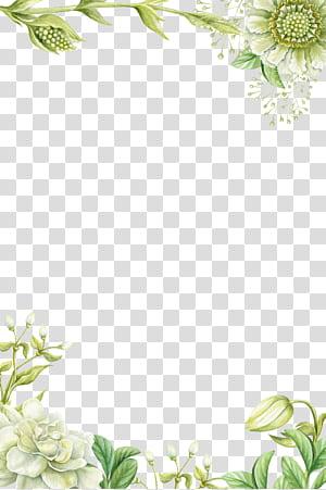 Pintura de flores, bordas de flores pintadas à mão verde, ilustração de flores de pétalas brancas png