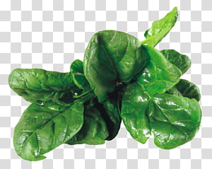 vegetais de folhas verdes, salada de espinafre Cozinha vegetariana Vegetal, espinafre PNG clipart