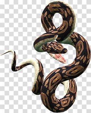 Cobra python reticulado bola python, cobras PNG clipart