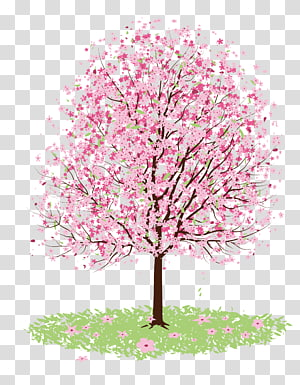 pink tree, Cherry blossom Desenho Árvore, cerejeira png