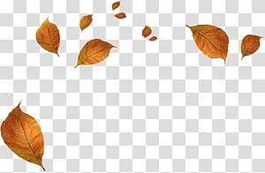 folhas secas de outono marrons, folhas de outono, folhas murchas de outono PNG clipart
