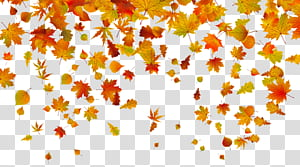 Folha de outono cor, folhas de outono, ilustração de folhas de bordo PNG clipart