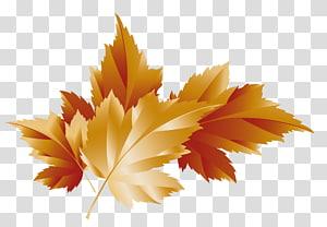 ilustração de folha marrom, outono, decoração de folhas de outono PNG clipart