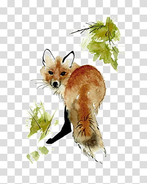 Raposa-vermelha, Raposa-vermelha, Pintura em Aquarela, Desenho Arte, Raposa png