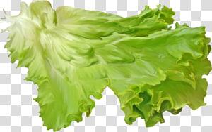 alface de folha vermelha salada de alface, folha png