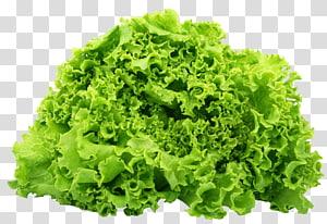 alface vegetal, alface Butterhead alface Romaine Cozinha vegetariana Salada de legumes, alface verde png