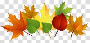 ilustração de folhas de cores sortidas, folhas de outono, folhas de outono PNG clipart