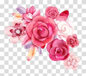 natureza morta: rosa rosas flor aquarela criativa, desenho flor flor material ps, flores vermelhas, flores rosa pétala PNG clipart