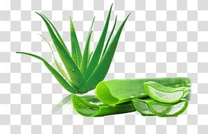 Aloe vera Aloin Leaf Gel, vera png
