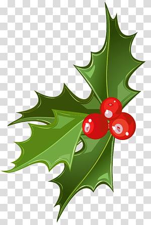 Azevinho de Natal Azevinho comum, azevinho de Natal, folha verde e ilustração de baga vermelha png
