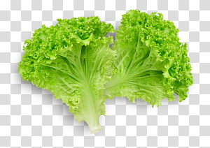 ilustração de alface, alface Butterhead sanduíche de alface Romaine alface Legumes de folhas, alface png