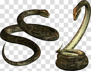 Cobra venenosa Papua Nova Guiné Réptil, Cobra PNG clipart